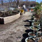 麻溝公園 風のガーデン 植栽作業2