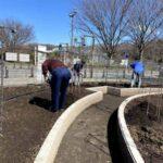 麻溝公園 風のガーデン 植栽作業3