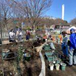 麻溝公園 風のガーデン 植栽作業7