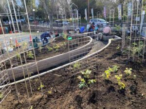 麻溝公園 風のガーデン 植栽作業8