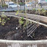 麻溝公園 風のガーデン 植栽作業9