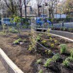 麻溝公園 風のガーデン 植栽作業12