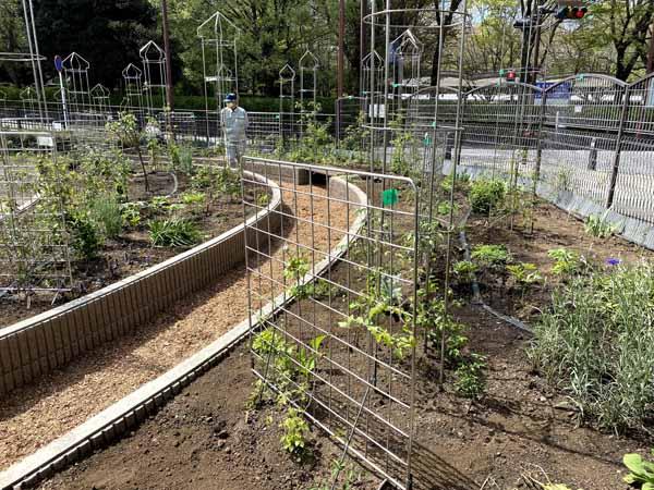 麻溝公園 風のガーデン 植栽作業14