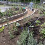麻溝公園 風のガーデン 植栽作業13